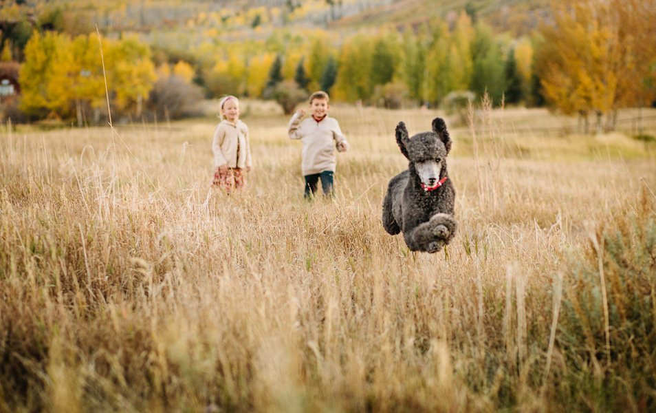 Blog Love Featuring Wonder Dog Jamy Beecher Photography